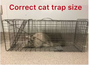 Correct Cat Trap Size